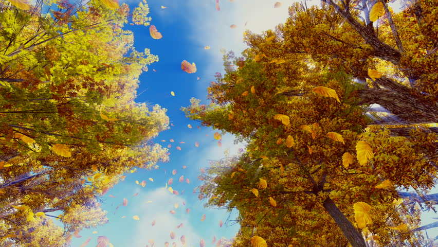 Look up at the golden autumn leaves falling from trees in slow motion against bright sunshine and sky background. Fall season realistic 3D animation.