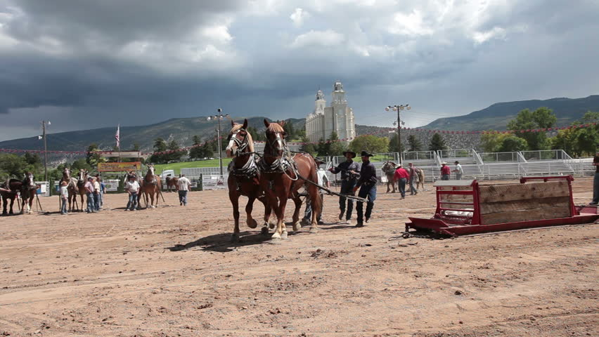 MANTI, UTAH - AUG 27: Draft Horse pulling hard during competition at local county fair with draft horses dragging a heavy sled on a long run on August 27, 2011 in Manti Utah.
