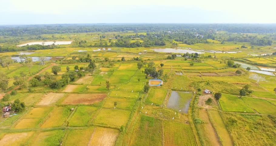 Aerial view birds flying shot on rice field | Shutterstock HD Video #18923000