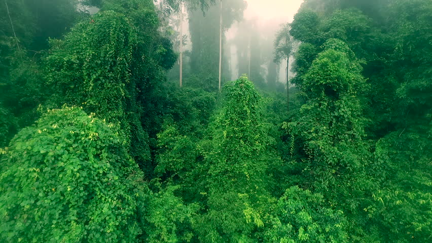 Drone footage of Borneo rain forest moving through the jungle #19141780
