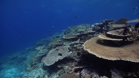 Ocean scenery healthy reef, surge and lots of fish and plate, staghorn and table corals, on shallow coral reef, HD, UP28479