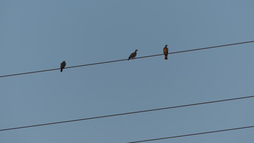 Bird On A Wire Electricity Video - WIRE Center •