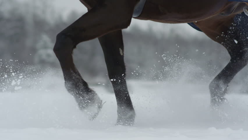 SLOW MOTION CLOSE UP DOF: Big powerful dark bay horse trotting through white snowy blanket. Powerful brown gelding stepping on field covered with dry powder snow, snowflakes rising and flying around