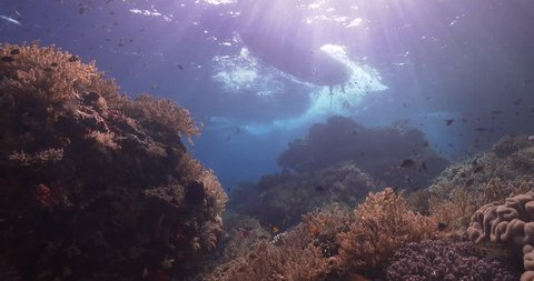 Ocean scenery tender boat passes over nice soft coral reef, sunbeams, original mxf files and metadata are gone, on shallow coral reef, 4K UltraHD, UP38417
