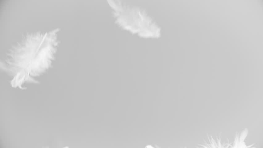 White feathers falling down | Shutterstock HD Video #19388230