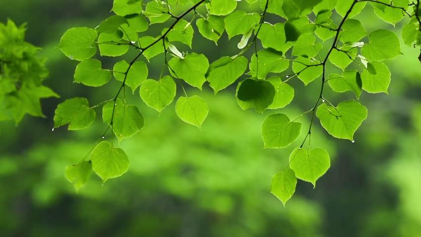 Raine and Fresh green