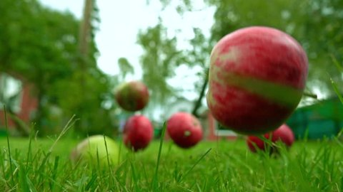 Red and green apples falling on the grass. Super slow motion shot