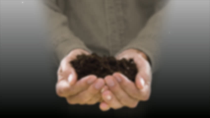 holding & growing a  tree, man holding soil & seed, tree growing and blowing in the wind, time lapse  holding a little growing tree plant in hand, animated