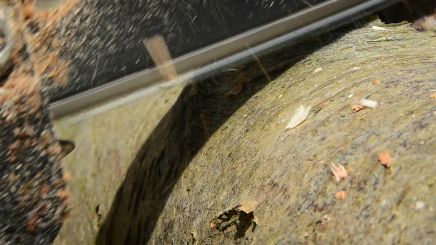 A Wood Log Rested in Stock Footage Video (100% Royalty-free) 19610680    Shutterstock