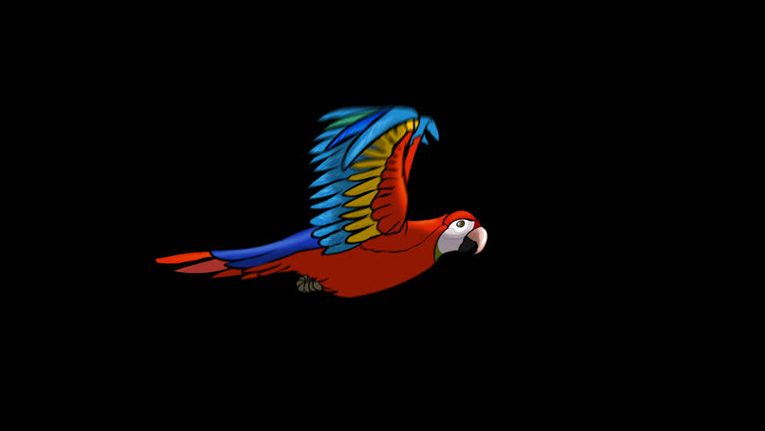 Cycle of flying macaw, hand-drawn animation