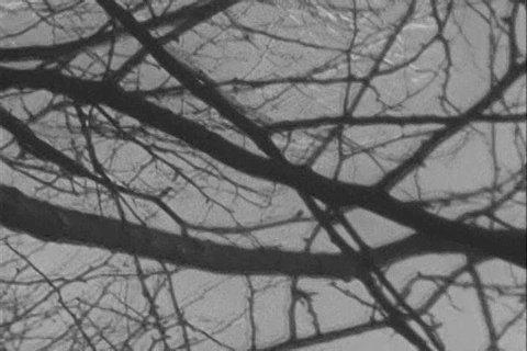 roethke cuttings