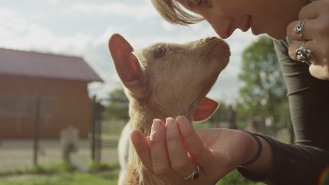 SLOW MOTION, CLOSE UP, LOW ANGLE VIEW: Happy young girl caressing happy cute kid goat on smallholding farm chewing food. Beautiful domestic animal enjoying warm sunny summer day in big zoo