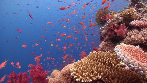 Beautiful underwater scenery, lots of dramatic action, on shallow coral reef, HD, UP16283