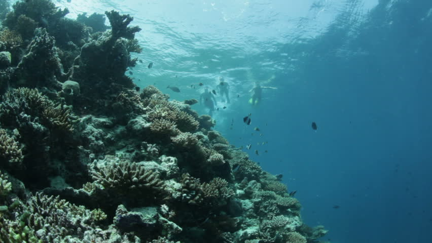 snorkelers on surface snorkleing over coral reef