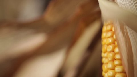 Sliding over a golden corncob
