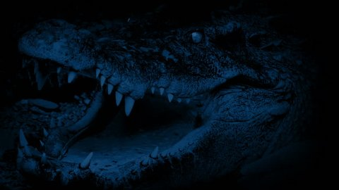 Crocodile At Night Opens Mouth