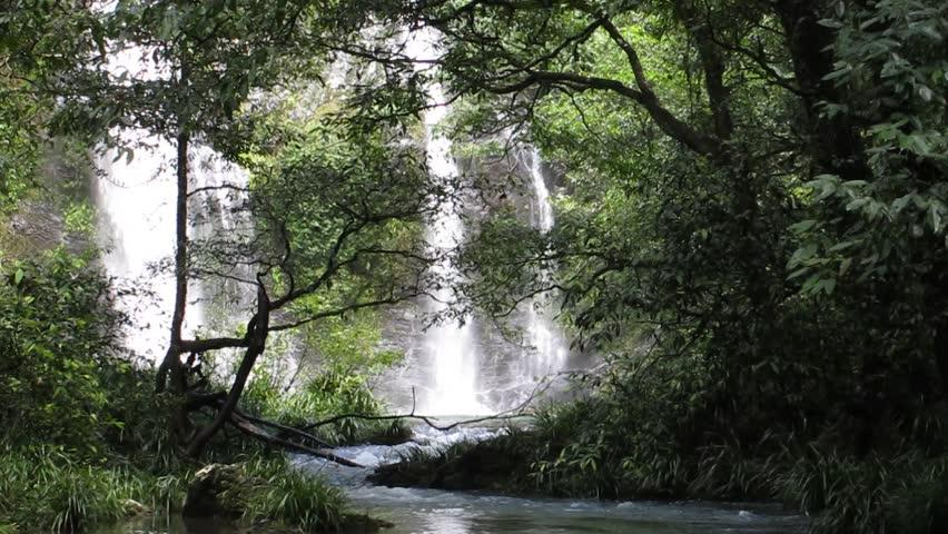 bushwalking to the Cassowary Falls, Daintree Area, North Queensland, Australia