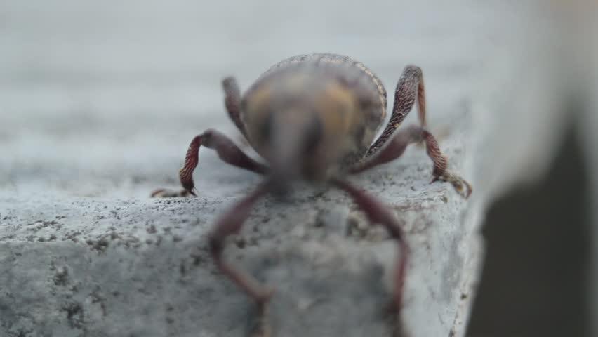 Header of weevil