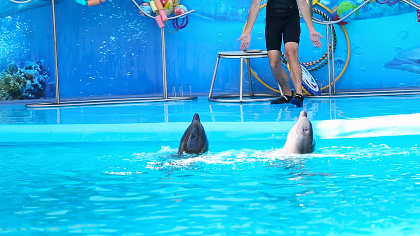 speeches about dolphins A study claims to have recorded a previously unknown language between dolphins it describes as akin to human speech ― but not everyone's convinced researchers say they made an audio recording of two black sea bottlenose dolphins named tasha and yana emitting unique pulses and whistles that.