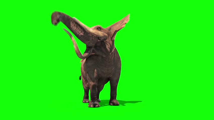 Elephant Attacks Front Green Screen #20583520
