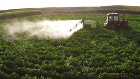 The tractor pulls machine for a spraying in a field of peppers. Aerial footage.
