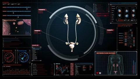 Scanning kidneys in digital display dashboard. X-ray view.