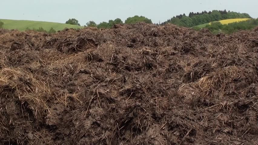 Pile of manure. Ambient sound with buzzing of flies, singing lark and voice of pheasant