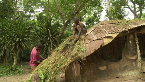 Osogbo, Nigeria - August 2013;Two men putting new thatch on roof in Sacred Grove.