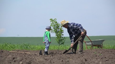 Grandson and grandfather sett the new tree in the ground, team work