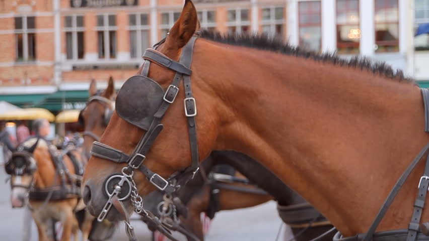 Carriage Horse Close Up in Brugge (HD). Carriage horse close up in Brugge Belgium, shot at F2.8 and 50mm to blur the background. All people and signs are unrecognizable