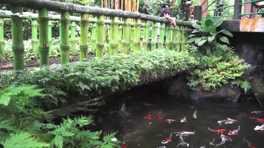 Cute little girl watching various color Japanese koi carp swimming in fresh flowing water pond.