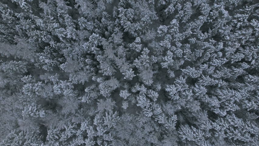 Aerial Video.Winter forest. Forest in snow. Flying over the snowy trees.   Shutterstock HD Video #21389530