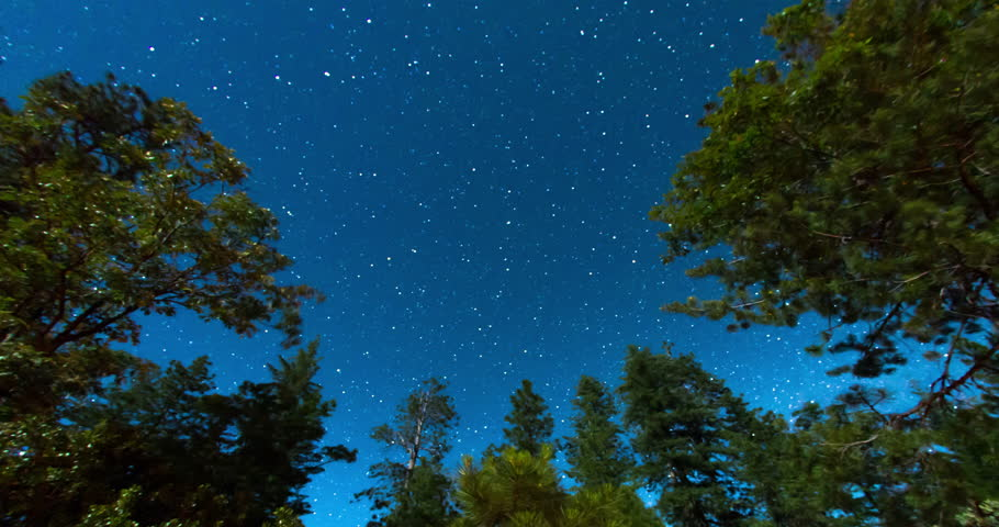 Night Sky Above the Treetops. Pointed towards the North Star.