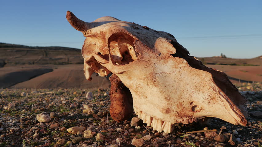 Animal skull time lapse in Morocco