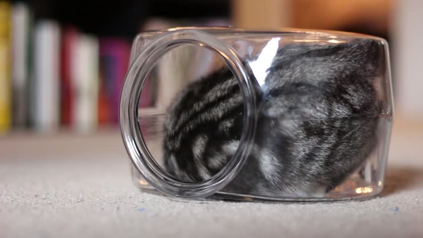Cat Playing in Fishbowl