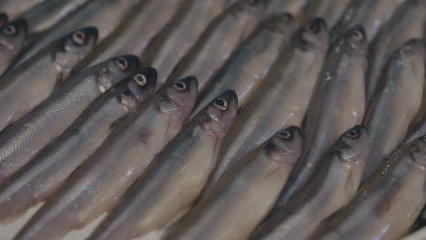 Fresh herring fish in the market