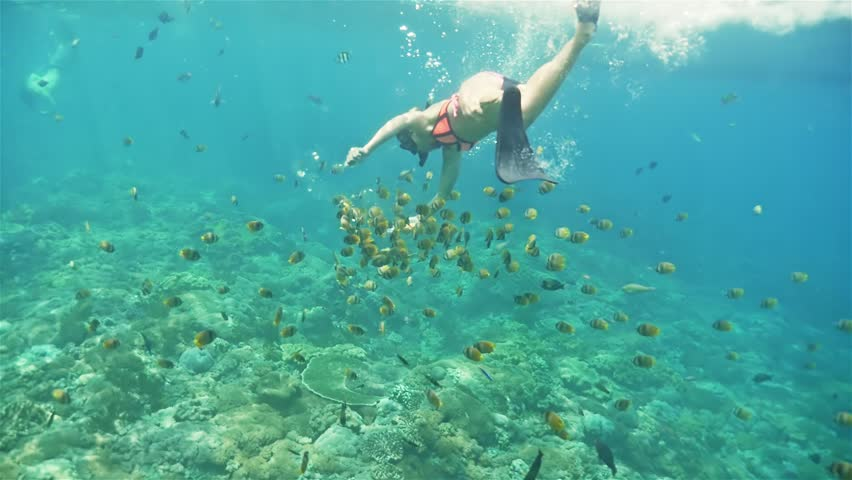 Fish Underwater Sea Coral Water Blue Swimming Tropical ...