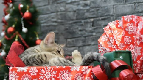 6 in 1, beautiful cat and puppy  in holiday spirit surrounded by New Year's decoration
