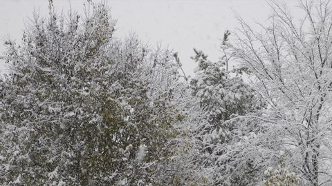 Snowfall time lapse video showing fluffy snowflakes with a variety of trees in winter