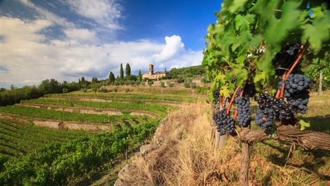 Time lapse of Chianti vineyard landscape in autumn, Tuscany, Italy
