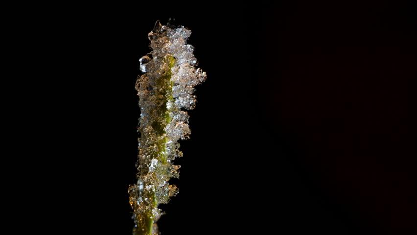 Frost melts on a green stalk | Shutterstock HD Video #22782640