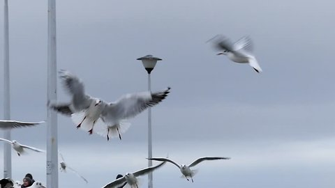 a Girl`s Hand Feeding Seagulls Flying Over a White Pier With Lampposts and People on it in Autumn