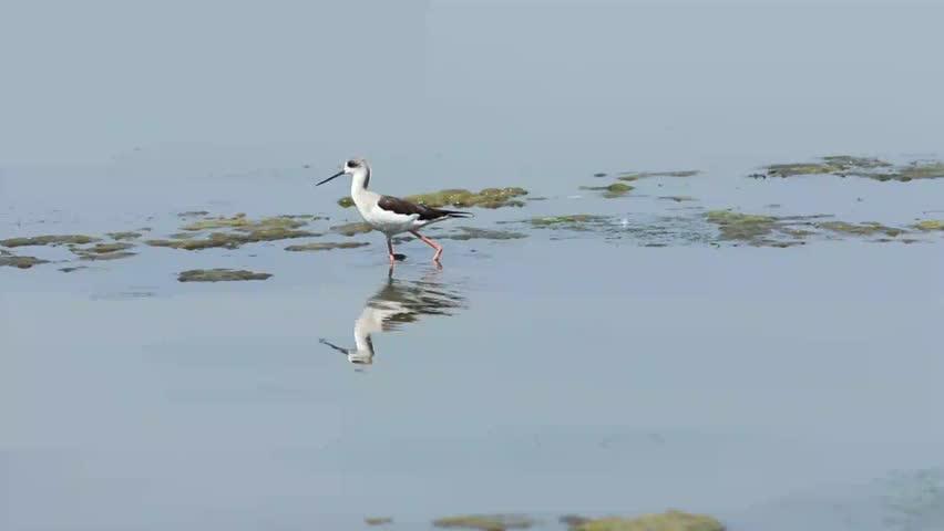Header of shorebird