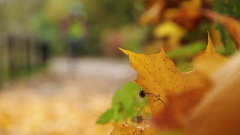 Cyclist cycling through woodland / autumnal setting / path on a bike