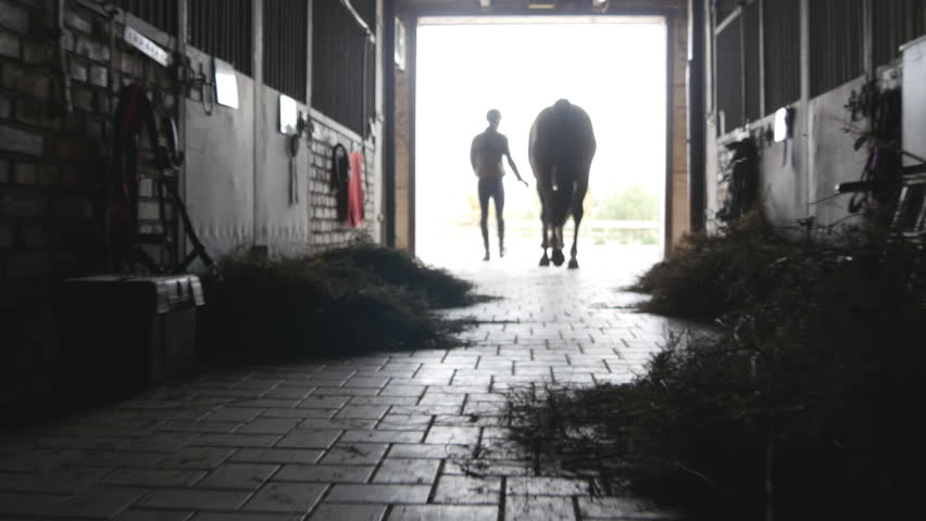 Young jockey is walking with a horse out of a stable. Man leading horse out of stable. Male silhouette with stallion. Rear back view. Love for animal. Beautiful background. Steadicam shot