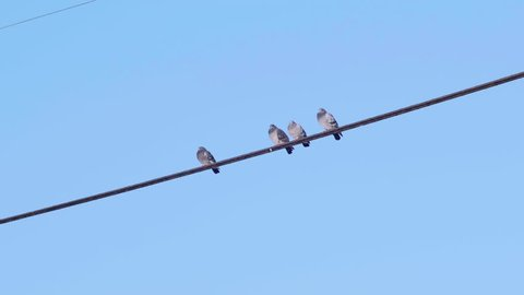 Birds Sitting on a Wire then Flying Away