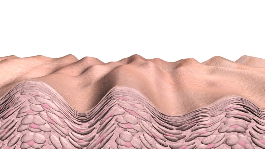 Skin aging  animation showing a cross section of skin and cells with aging effects or in reverse the reverse aging effects. This is an artistic simulation.