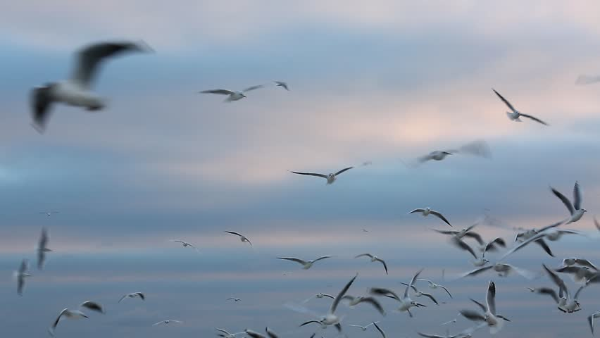 Seagulls fly in air over the sea against the background of the sky. | Shutterstock HD Video #23472790