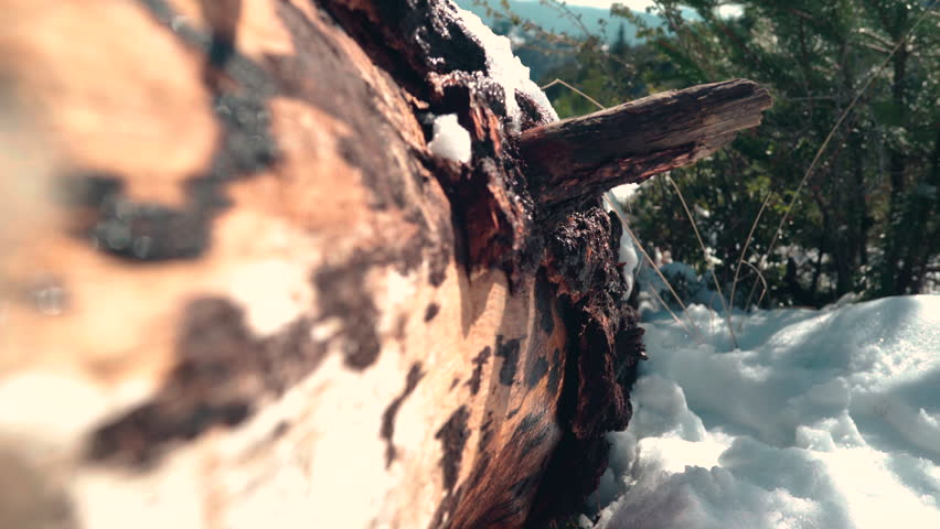 Snow Melting Dripping Off Log Stock Footage Video (100% Royalty-free)  23551600   Shutterstock
