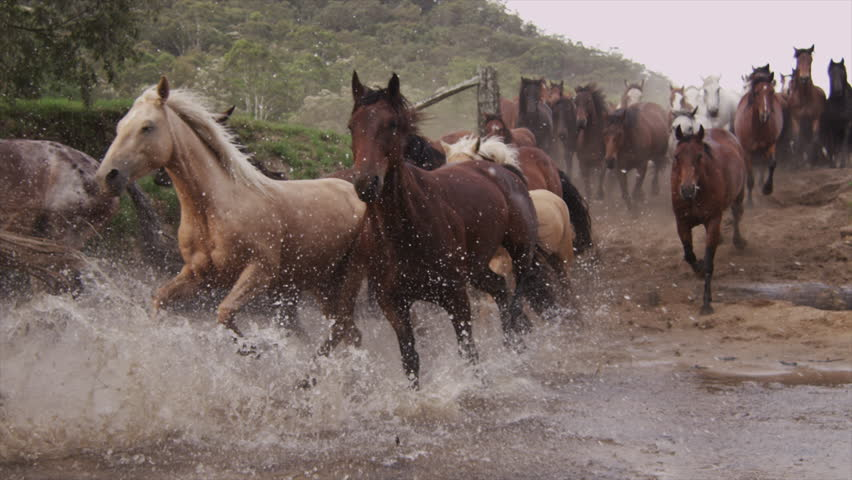 Horses Running Stampede | Shutterstock HD Video #23557300